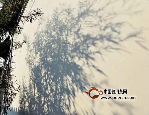 陈国义:我和乌龙茶那些事儿(上)