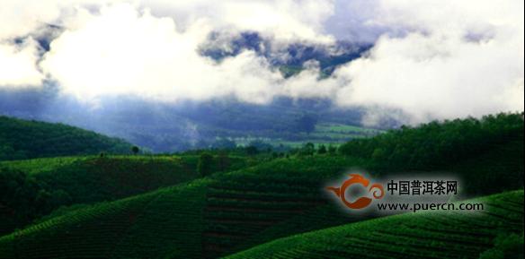 【访谈】解码全球首家茶庄园   柏联开启庄园茶新时代
