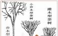 乔木、灌木傻傻分不清?来看茶叶基本分类之树型篇