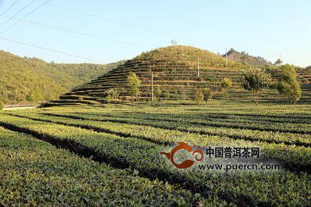 茶叶数据:2016年上半年各国茶叶生产与出口