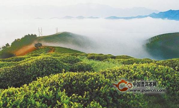 茶叶数据:2016云茶产业发展情况报告