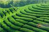云南德宏州质监局走进企业  推介普洱茶地标