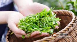 2017年普洱春茶的价格趋势