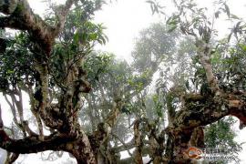 普洱茶的地理价值 ——来自自然的启示(3)