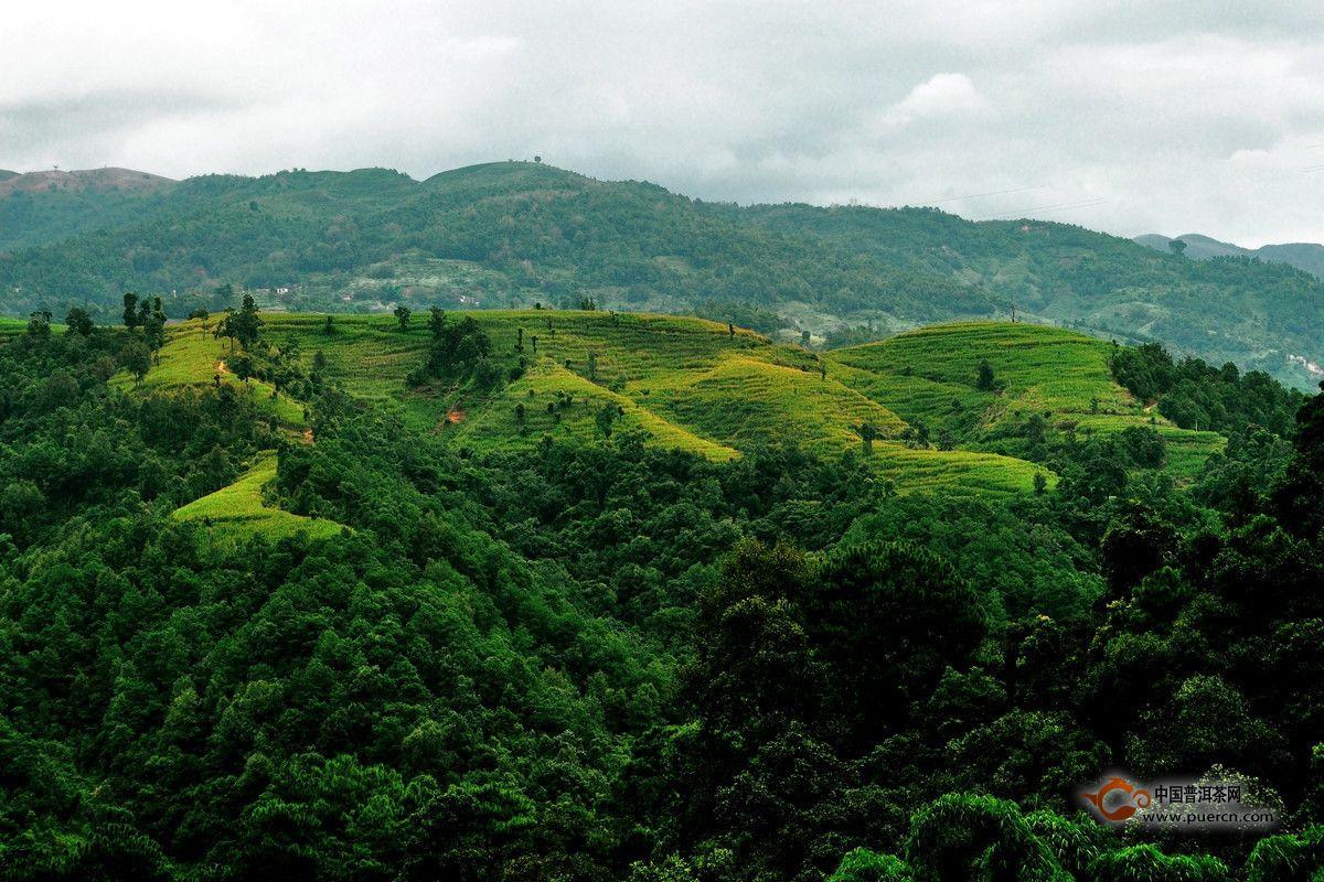 无量山茶叶的特点 - 普洱茶产地,普洱茶产区,云南是茶