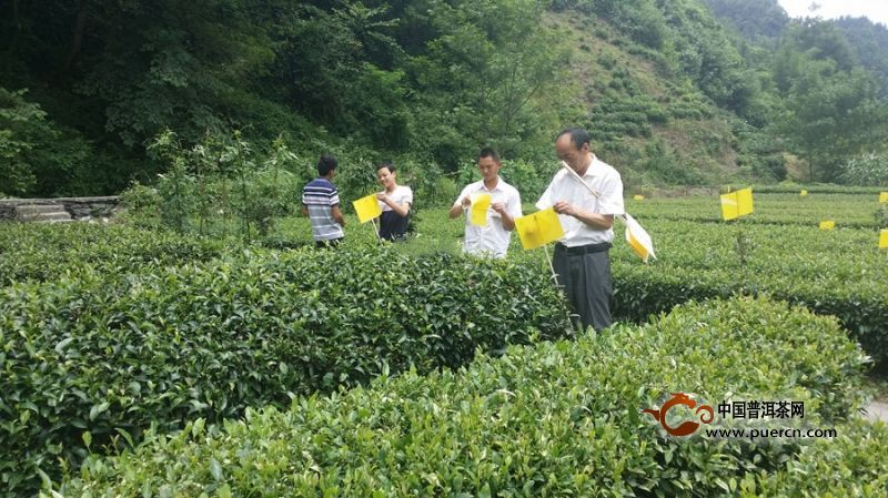 影响茶叶苦涩的因素有哪些?