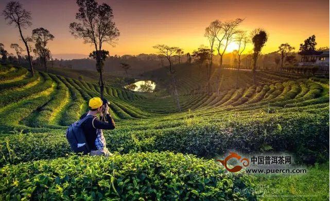 """亚博平台登录链接地址:让世界爱上""""中国茶"""""""