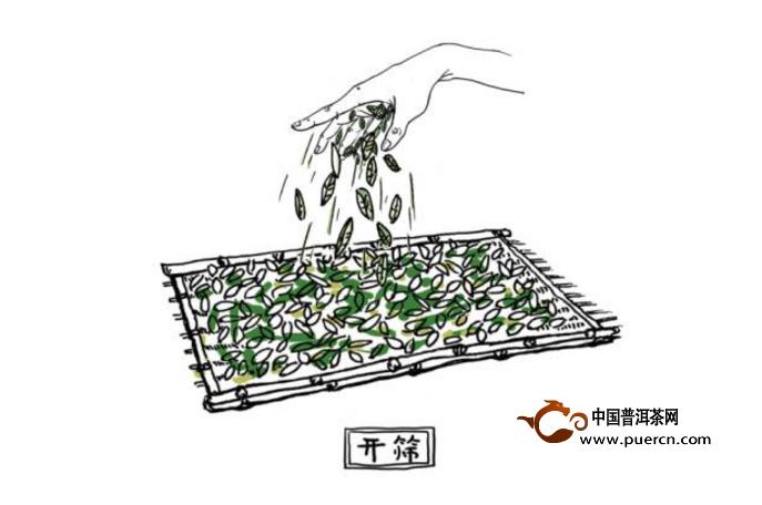 这篇手绘漫画,把白茶的传统工艺和新工艺画得一目了然,一起来