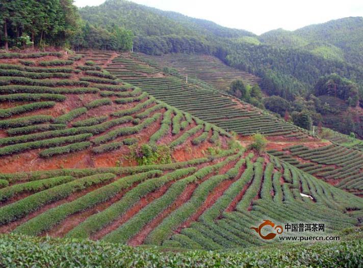 红壤类茶园土