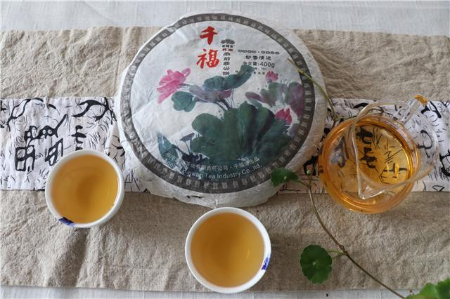 【好茶品味】9月第4周(9月18日-9月24日)