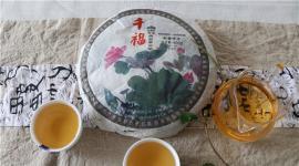 老同志千福普洱:玉寿神韵,10年醇香