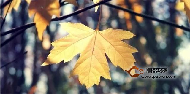 渐入山里,忘了来之所求。山秋景色渐次呈现在我眼前,不同品种的树木,在秋风的描绘下现出不同的色彩。原来渐冷的气温犹如调色盘,不同树叶经过调色盘的浸润后变成五彩色,一句诗似烧非烟火,如花不待春不禁涌上心头。    漫步林间,乐赏秋之静美,心生幽趣。兴往林深处走去,潺潺水声,悦耳清心,但见一方水池现于我的眼前,池水清澈透明,水面上飘浮着落叶,微风吹过,波澜不惊。