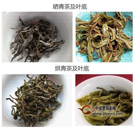 普洱茶晒青与烘青的识别和对比