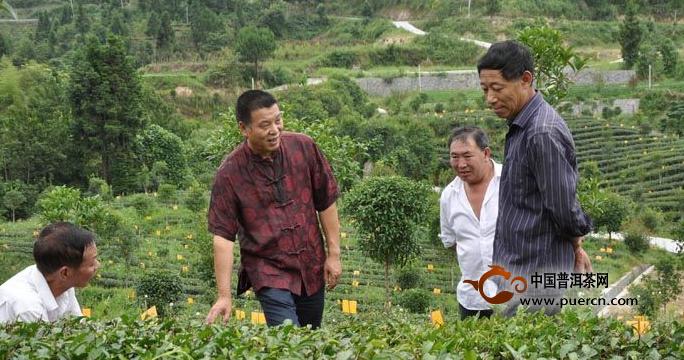 邱建红(左二)在给村民讲解茶园管知识
