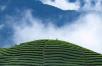 【喝茶说茶】唯有自然能让中期茶不再尴尬