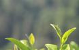中国茶叶质量提升专题研讨会在云南召开