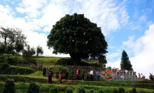立博体育-凤庆:茶产业转型升级迈新步