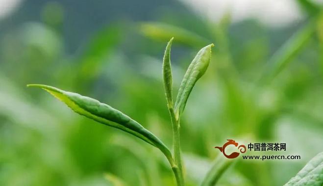 新昌小将镇举办首届茶文化节