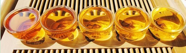 普洱茶口感靠氨与酚,就好比茶汤的味精