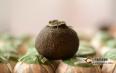 小青柑冲泡方法:你真的知道怎样泡好小青柑吗?