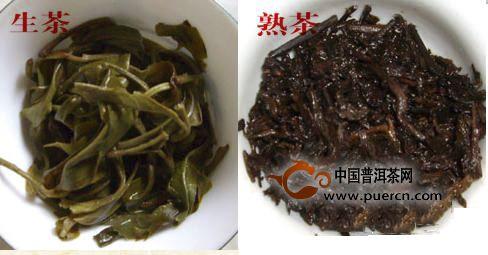 春尖普洱茶的功效与作用