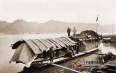 中国红茶走向世界的历史考究(一):中国红茶的伟大历程