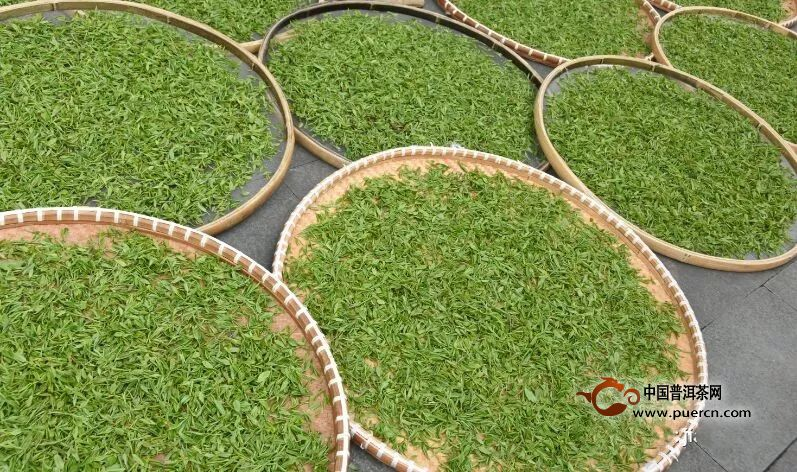 西湖龙井茶的详细炒制加工工艺流程