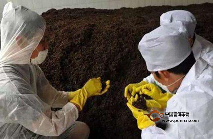 详解普洱熟茶制作工艺
