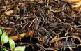 鉴别普洱茶品质有什么妙招