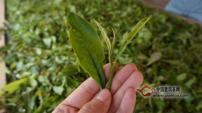 普洱茶的功效和作用体现在哪几个方面