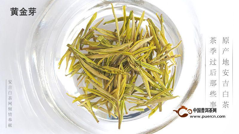 安吉黄金芽与安吉白茶的区别
