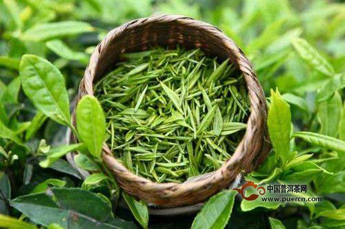 红茶与绿茶的主要区别