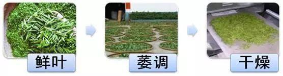 今天给大家讲解中国六大茶类的基本认识!