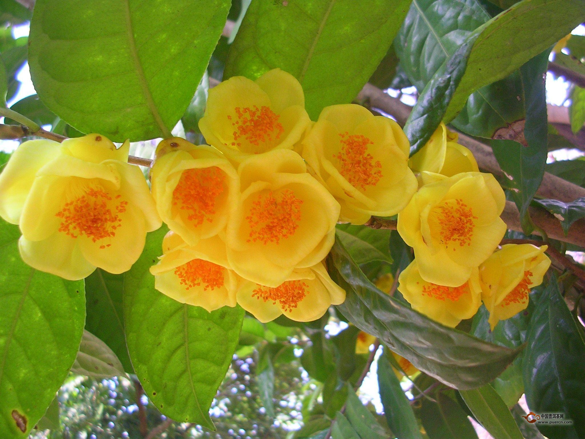 最珍贵的植物_世界上最珍贵的植物有哪些