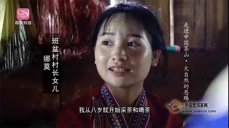 【陈晗特搜】走进中国茶山之云南西双版纳感受大自然的恩赐