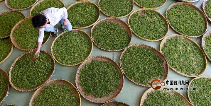 欧冠杯下注:望海茶:一个区域公共品牌的崛起之路