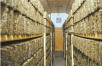 """东莞为何成为""""茶仓""""?东莞茶叶收藏量全国第一  高达40万吨,茶叶年均交易额达50亿元"""