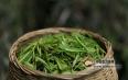 茶叶产销大数据:全国年销茶叶将超2400亿元