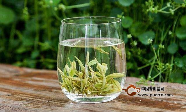 喝绿茶的注意事项
