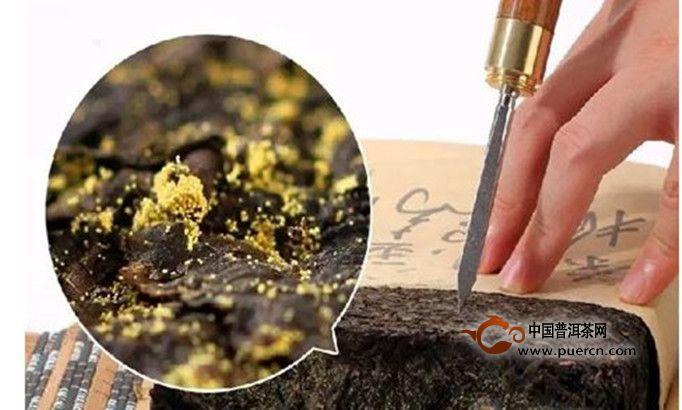 黑茶金花菌的作用