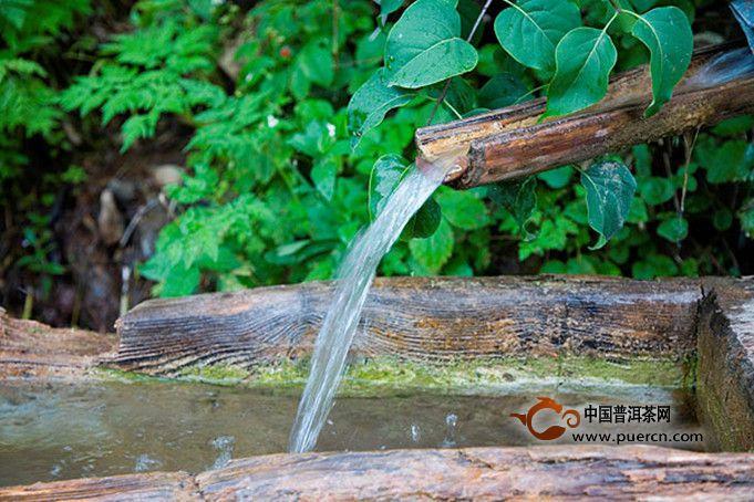 绿茶泡茶水温图片