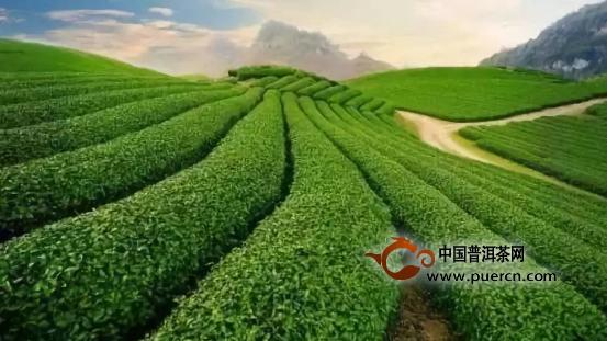 数据:2017年全球茶市概况(中国茶叶产量255万吨,世界第一;出口量35.5万吨,世界第二)
