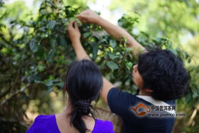 对谈吴疆:普洱茶行业发展断代史