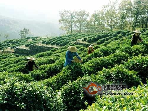 英山云雾茶多少钱一斤