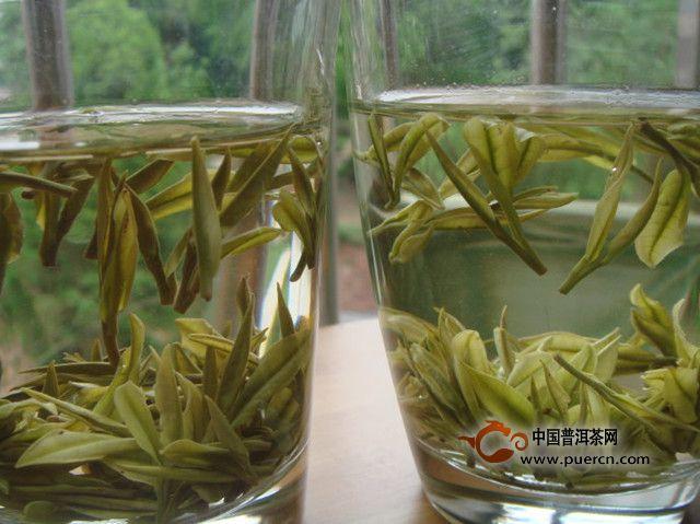 长期喝安吉白茶功效与作用