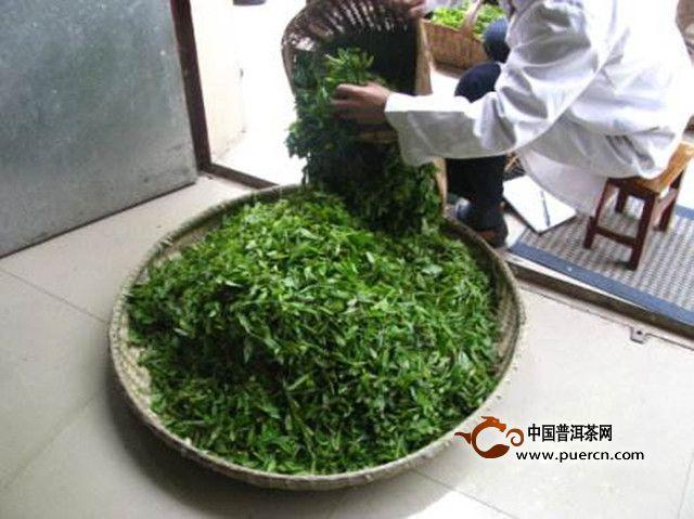 宝顶绿茶制作工序