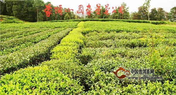 久盈:打造雅安茶的品牌,让雅安茶被世界认识
