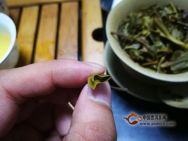 入门优选 正味布朗——2018中茶起航生茶品测