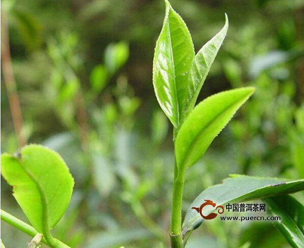 立博体育-山阳茶企在第六届西部茶叶博览会上成功举办推介会