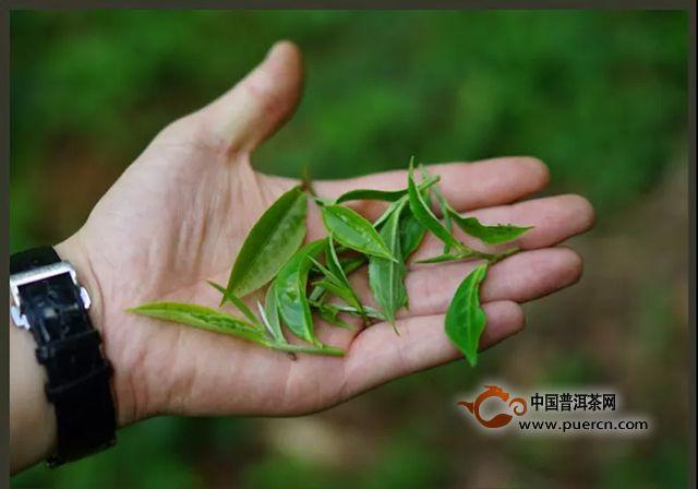 3分钟学会辨别红茶和普洱茶的方法